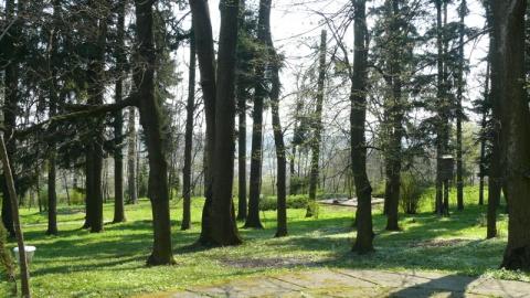 Copaci în curtea conacului de la Tescani