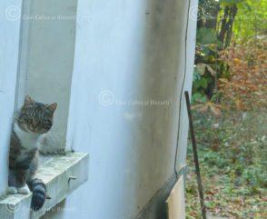 Pisica pe pervaz