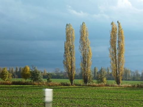 Three trees on the field. Germany