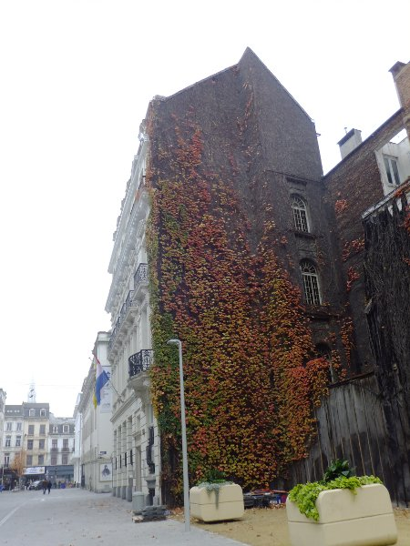 hanging-plant-house-brussels-DSCG3207