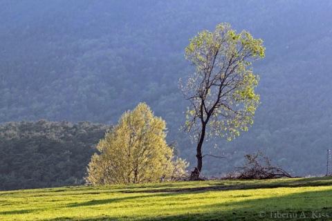 poplaca-copaci-pe-dealuri-IMG_5472