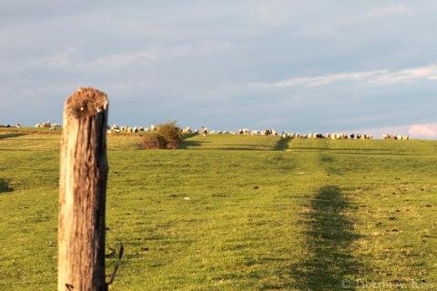 turma-de-oi-si-cioban-pe-dealurile-Rasinarilor-2014-IMG_5468