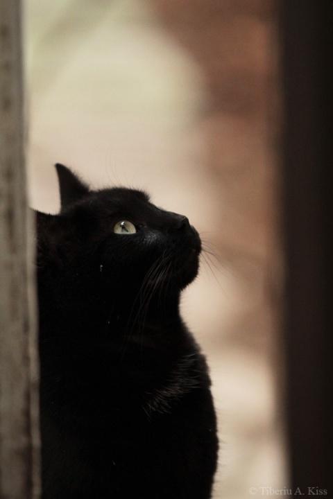 Sata, pisica neagra, un portret (IMG_2457)