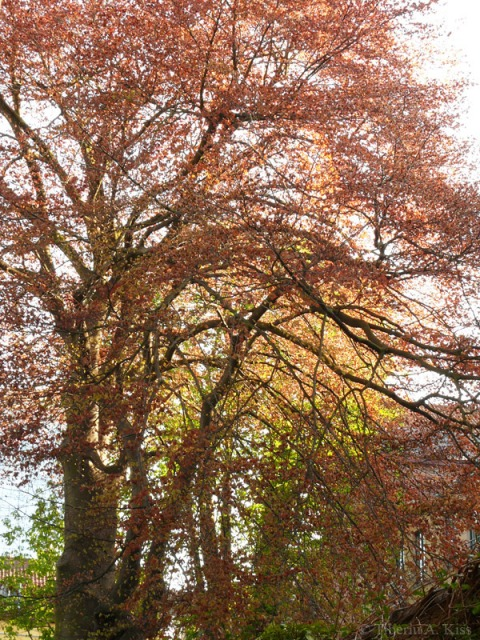 Copacul din gradina, primavara