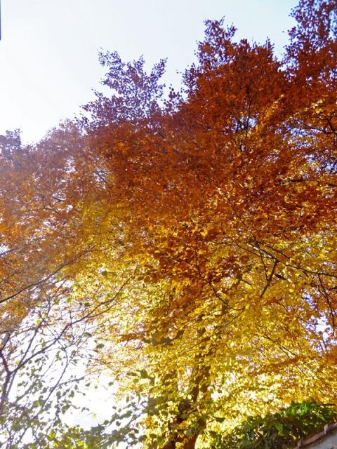 Copacul din gradina, iarna in Decembrie