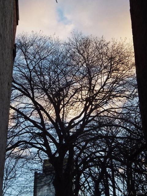 Copacul din gradina in miezul iernii in Ianuarie