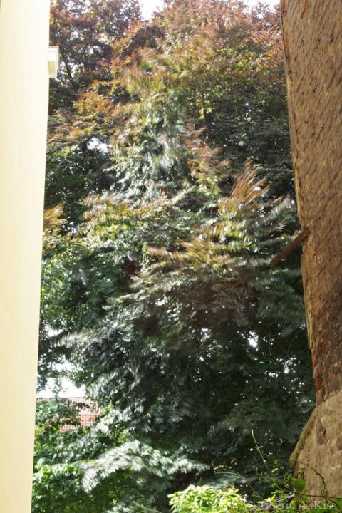 Copacul din gradina frematand in boarea verii.