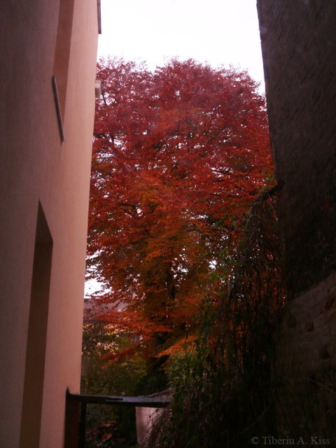 Copacul din gradina, toamna tarziu in Noiembrie