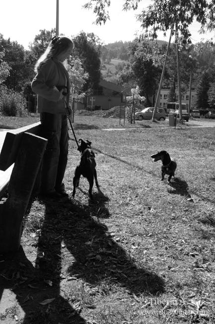 playground-dogs