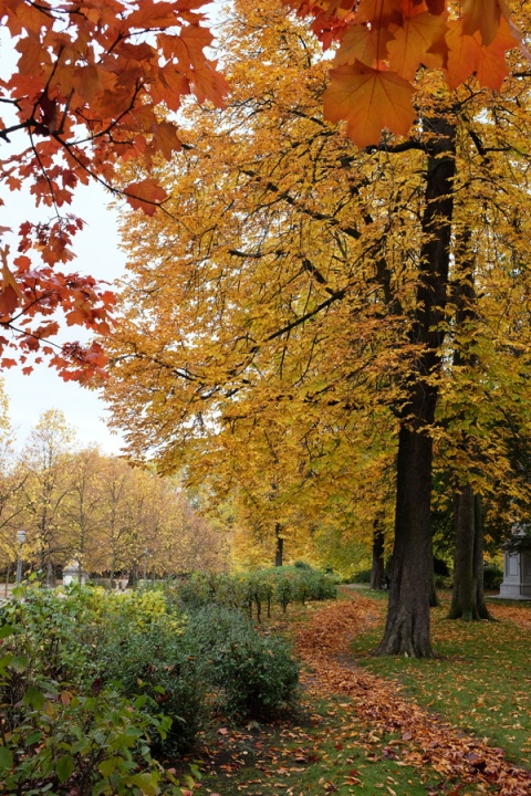 autumn-in-the-parc-bruxelles-2015-01
