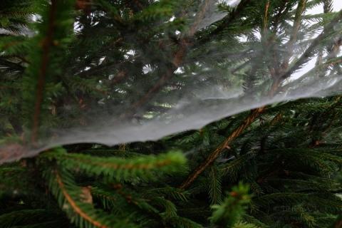 spider-nets