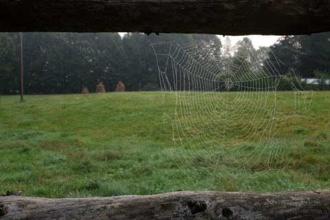 spidernet-heystack