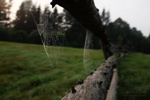 two-spider-nets